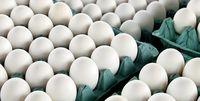 عرضه تخم مرغ بستهبندی شده اجباری میشود