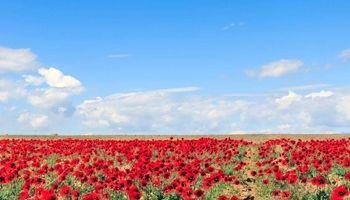 طبیعت دیدنی بهار در مرز ایران و آذربایجان +تصاویر