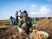 آغاز خرید تضمینی سیب زمینی بهاره از کشاورزان/ قیمت هر کیلوگرم سیب زمینی ۴۱۲۱ریال
