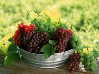 پنج میوهای که به درمان تمامی بیماریها کمک میکنند