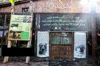 آغاز زندگی مشترک شیرهای ایرانی باغ وحش ارم تهران +عکس