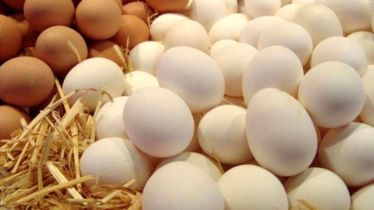 تخم مرغ شانهای ۲۸هزار تومان شد