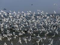 بازگشت پرندگان به تالاب هور العظیم +تصاویر