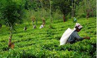 بدهی شرکتهای بیمهای به کشاورزان هندی به 3میلیارد روپیه رسید!