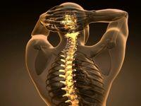 آناتومی و فیزیولوژی ستون فقرات و عملکرد کمر و گردن