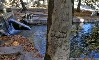 زخم یادگاری بر اندام درختان +تصاویر