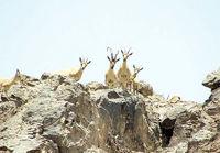 مجوز گردشگری در پارکهای ملی