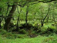 در برنامههای نجات جنگلهای شمال چه میگذرد؟