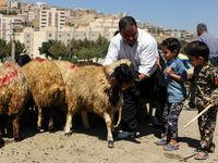 عرضه گوسفند در میادین شهرداری کیلویی ۱۴۰۰۰ تومان