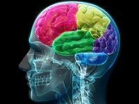 هنگام دروغ گفتن چه اتفاقی در مغز رخ میدهد؟
