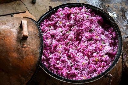 نگاهی به خط تولید خوشبوترین محصول ایران +عکس
