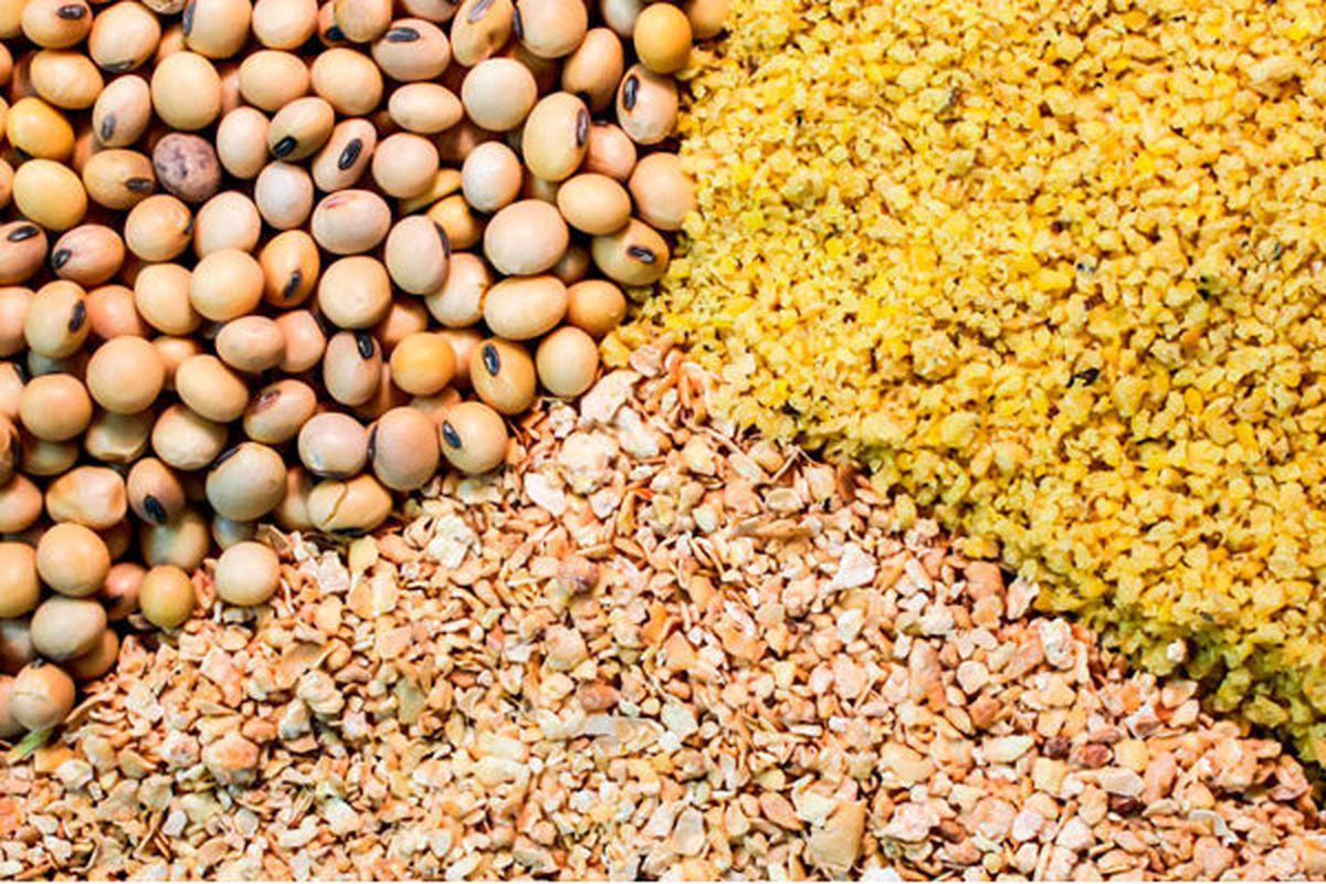 نابسامانی بازار نهادههای دامی