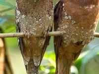استتار جالب یک پرنده! +عکس