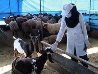 مراکز سه گانه عرضه دام بهداشتی تا روز تاسوعا باز هستند