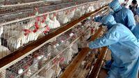 مهار موج آنفلوانزای فوق حاد پرندگان در کشور