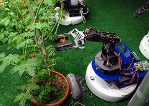 دانشجویان مازندران ربات کشاورز میسازند
