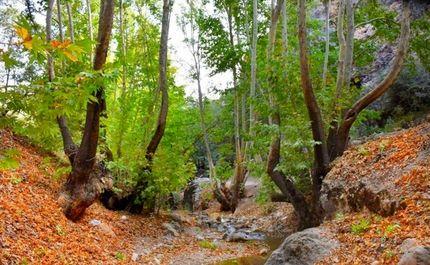 طبیعت پاییزی پایتخت طبیعت ایران