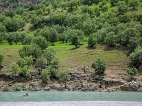 روش جالب عشایر برای عبور از رودخانه +عکس
