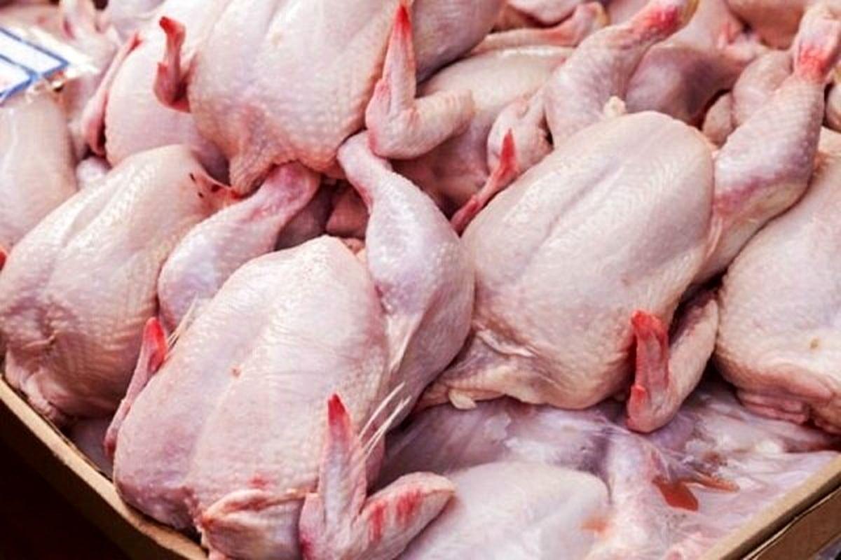 مرغ ذخیره نکنید!