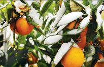 هشدار هواشناسی به کشاورزان
