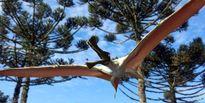 کشف فسیل خزنده پرنده ماقبل تاریخ در استرالیا +عکس