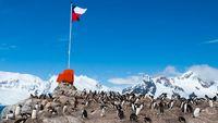 کرونا به «قطب جنوب» رسید
