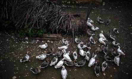 روستای زیبای غریبمحله بهشهر