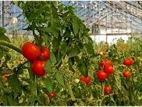 ارائه تسهیلات بانکی برای تبدیل گلخانههای سنتی به مدرن