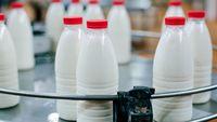 مشکل صنعت لبنیات تامین خوراک دام است