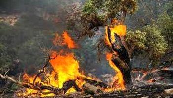 آتش سوزی جنگلهای بلوط خوزستان