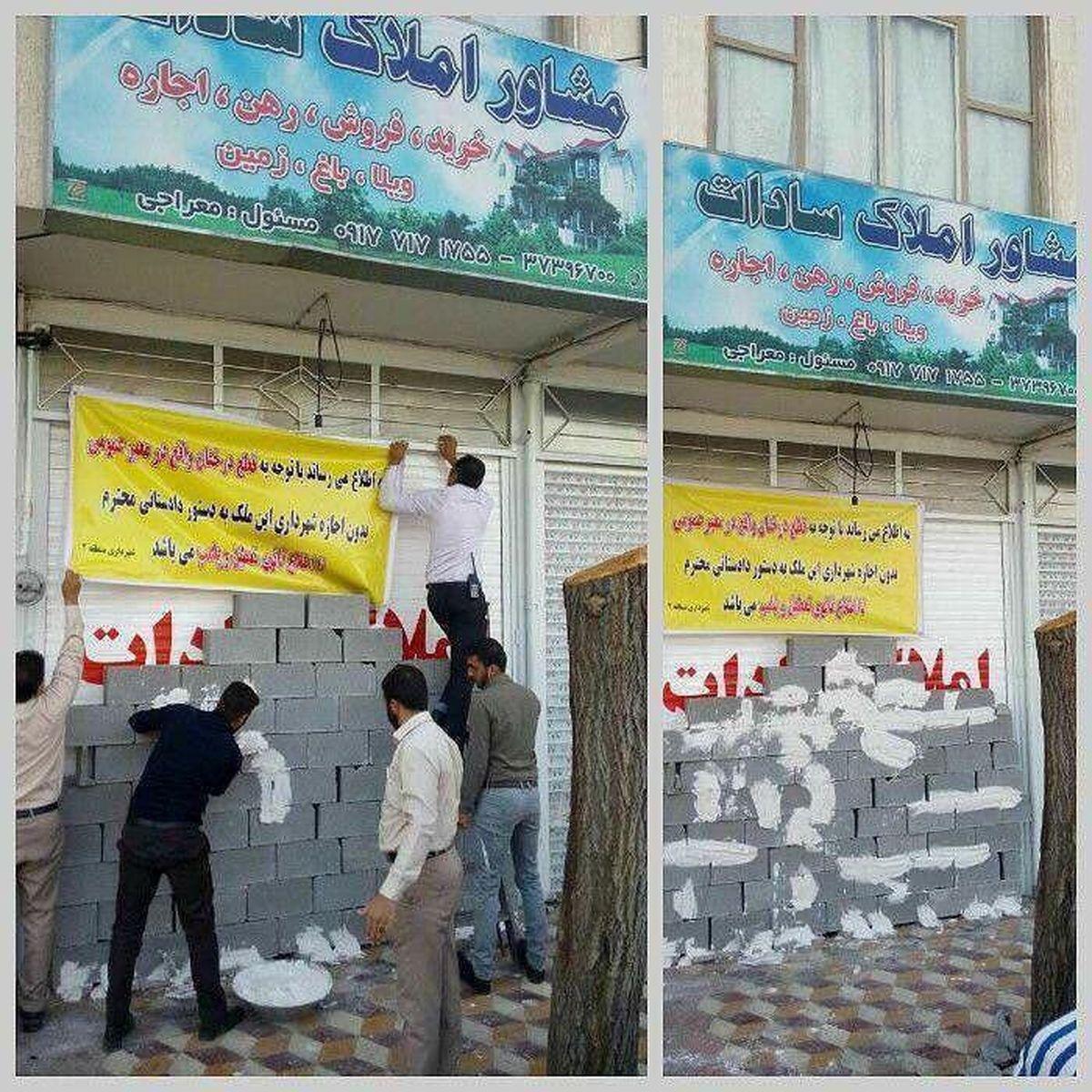 برخورد شهرداری شیراز با مالکی که درخت توت کهنسال را قطع کرد +عکس
