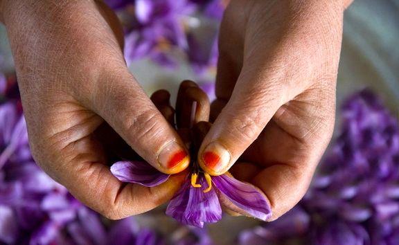 تنظیم بازار و حمایت از زعفرانکاران، دو مزیت مهم خرید توافقی در بورس
