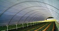 انواع نایلون گلخانهای و کشاورزی