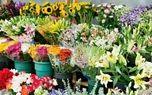 انتقاد نسبت به صادرات وزنی گل/ نگرانی نسبت به  توقف صادرات گل کشور