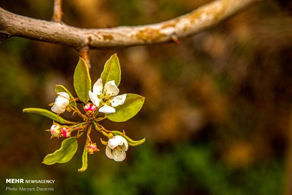 فصل بهار