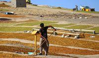 امسال ۳۰۰هزار تن کشمش در کشور تولید شده است