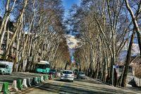 کاشت 800هزار نهال در پهنه جنوبی البرز/ شمارش معکوس برای ثبت جهانی خیابان ولیعصر