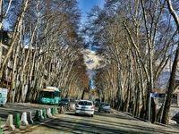 کاشت ۱۰۰۰اصله درخت ۸تا ۱۵ساله در خیابان ولیعصر