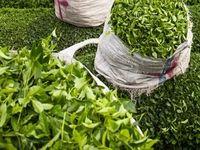 عملکرد تولید برگ سبز و چای خشک سال۱۳۹۷ منتشر شد +جدول