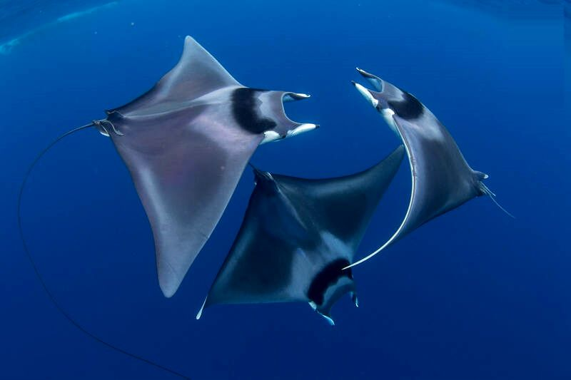 اعماق اقیانوس