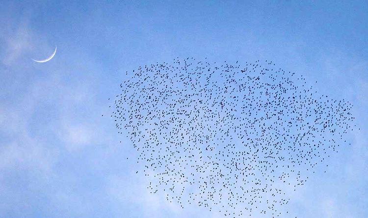 سمفونی پرواز در پایتخت تابستانی هخامنشیان