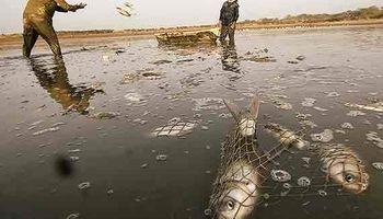 حمله گسترده تیلاپیا به آبهای خوزستان