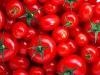 گوجه فرنگی ۷هزار تومان شد