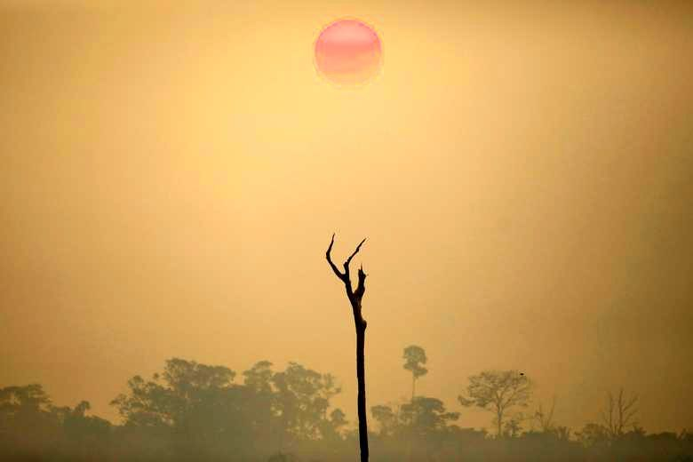 Pictures of the year: Environment