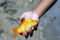 مرگ آبزیان در کشته رود +عکس