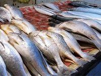 در یک سال گذشته مردم چقدر ماهی خوردند؟