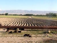 طالبان خط لوله انتقال گاز جوزجان به مزارشریف را قطع کردند