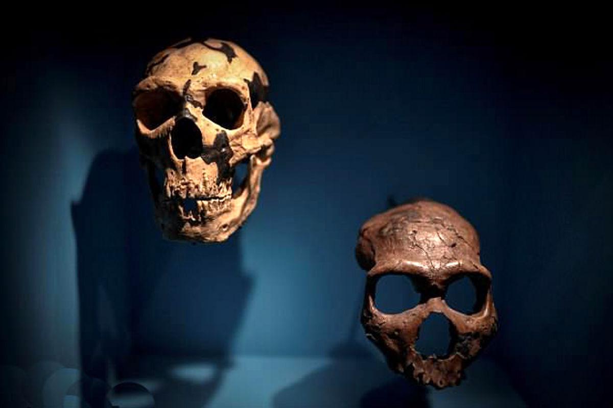 تولید مغز اجداد انسان در آزمایشگاه
