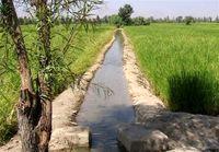برای ۲۶۰هزار هکتار اراضی کشاورزی سند داده میشود