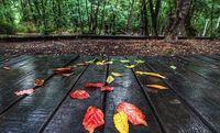 بارش اولین باران پاییزی در پارک جنگلی +عکس